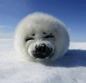 super cute baby seal