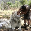 the lion whisperer