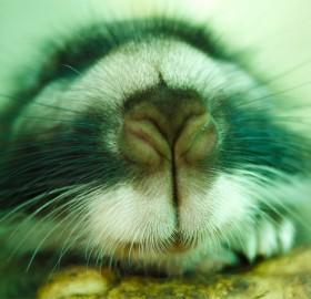 a very close nose