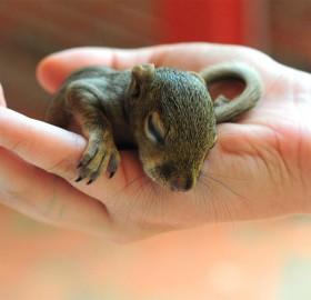 baby squirrel in good hands