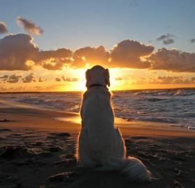 dog enjoys a beautiful sunset