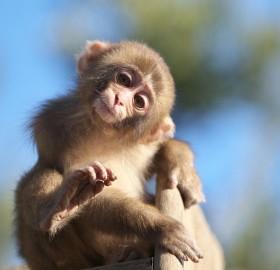 hi there monkey