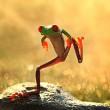 let`s dance frog