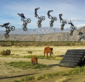 amazing motorcycle jump over elephants