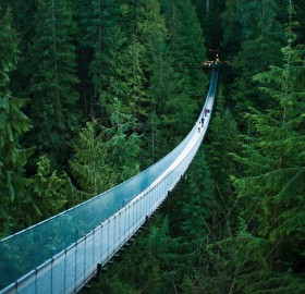 suspension bridge in canada`s forest
