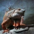 the king of all reptiles