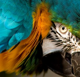 eye of the macaw