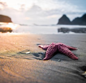 starfish, sunset and the beach