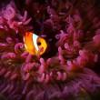 cute resident of deep sea