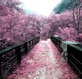 surreal pink bridge