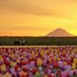 tulip field, oregon