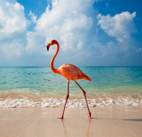 elegance of flamingo