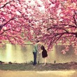 kiss under a cherry blossom tree