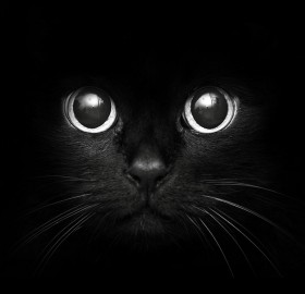 kitten in a dark