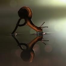 thirsty snail