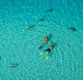 snorkelers and sharks, french polynesia