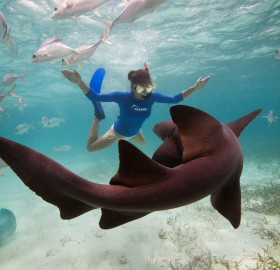 swimming with a nurse shark