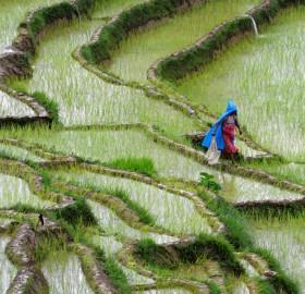 a farmer in nepal
