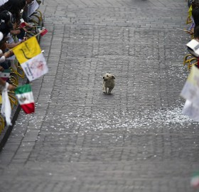 dog runs through a parade