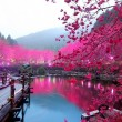 lighted cherry blossom lake, japan