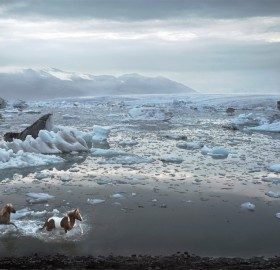 horses of iceland lagoon