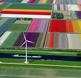 tulip fields, wind turbines and canal, holland