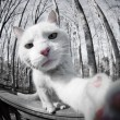 cat`s self-Portrait