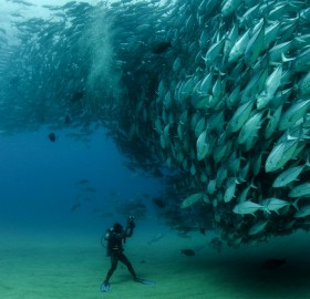 diver in front of thousands of fish