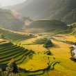la pan tan village, vietnam