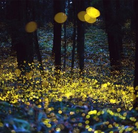 fireflies on long exposure