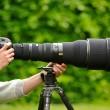 peek-a-boo with a photographer