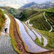 rice worker, china