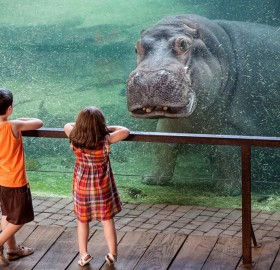 underwater hippo and kids