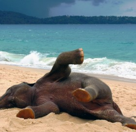 young elephant playing at the beach