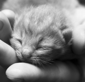 little kitty in my hands
