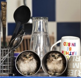 orphaned baby owls in their new home