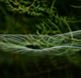perfection of the spider web