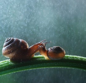 snail family under the rain