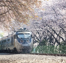 train going through blossom