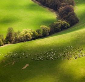 fields of slovakia