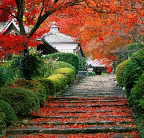garden stairs in kyoto, japan