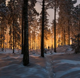 mysterious glowing light in a finland forest