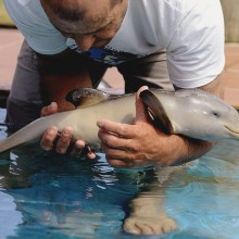 ten-day-old orphan dolphin