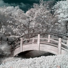 zen garden in infrared