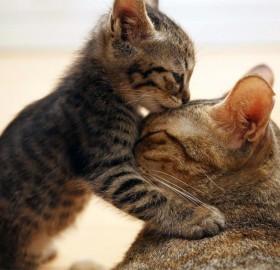 adorable kitty kiss