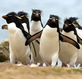 penguin gang