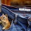 squirrel in my pocket