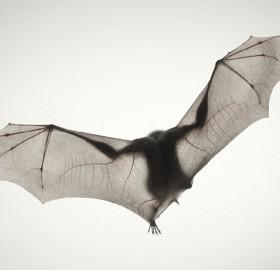 elegance of a bat