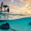 stingrays under the boat