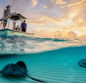 stingrays under the boat